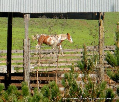 horse ranch on Platform Bridge Rd
