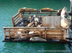harbor seals basking in the sun