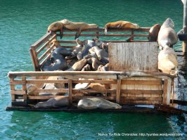 harbor seals basking in the sun