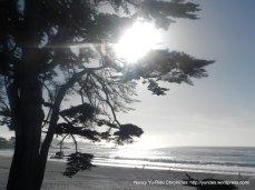 view of Carmel Beach