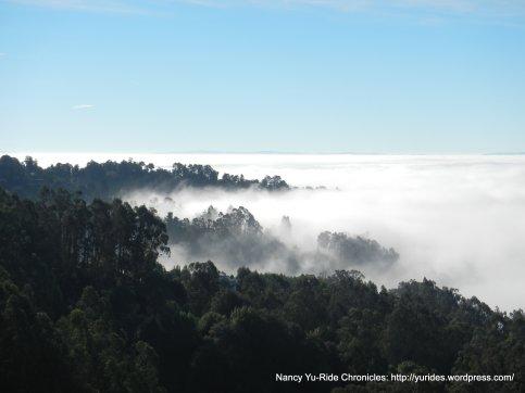 lingering fog above Tunnel Rd