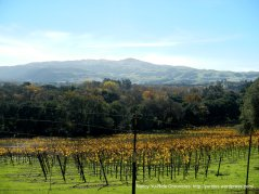 vineyard on Foothill Rd