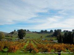 vineyard off Morello Ave