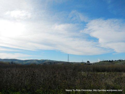 view of marshy grasslands