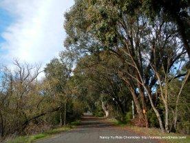 ped/bike path thru park