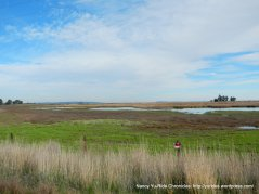 marshes at edge of Grizzly Island