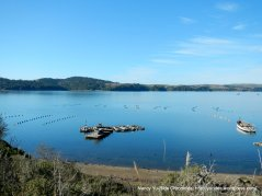 oyster farm-Tomales Bay