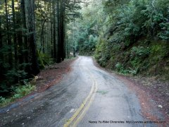 thru the redwoods on Bolinas-Fairfax Rd