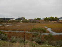 bay marshes
