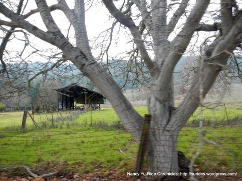 Pleasanton Ridge area