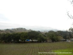 vineyard in Sunol
