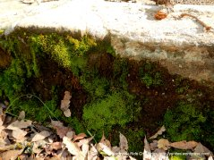 brilliant green moss