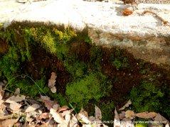 brilliant green moss