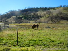 pastoral land-grazing horses