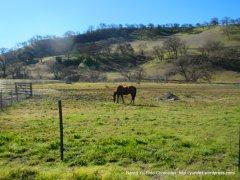 pastoral land-grazing horses