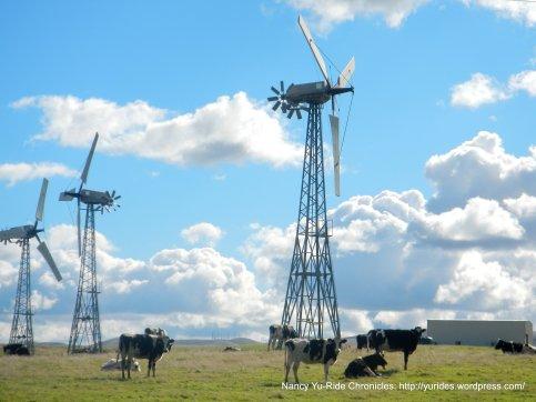 cows & windmills