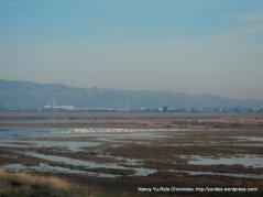 Grizzly Island-marshlands