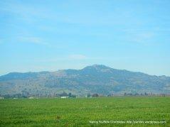 grasslands and open fields