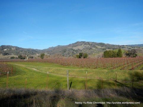 views of the vineyards