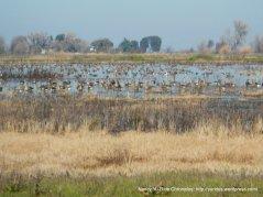 more migratory birds