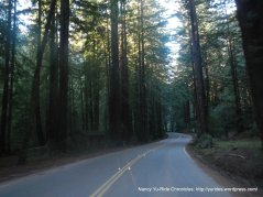 descend through the redwoods