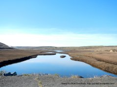 Pt Reyes National Seashore marshes
