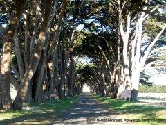 Eucalyptus lined windbreak