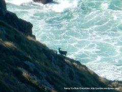 deer on the rocky cliffs