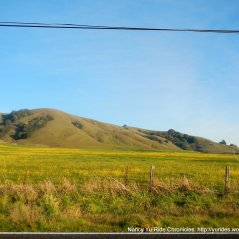 beautiful wildflowers-Hicks Valley