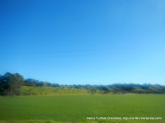 brilliant green fields