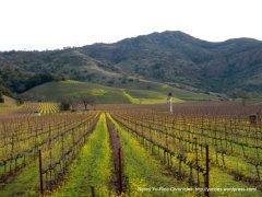 gorgeous vineyards & mountain slopes