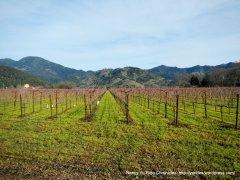 Knighrs Valley vineyards