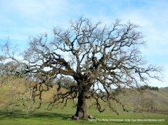 eye-catching tree