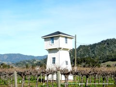 tower overlooking vineyard