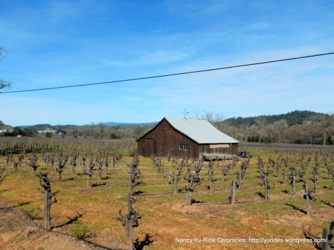 pruned vines-Dry Creek Valley