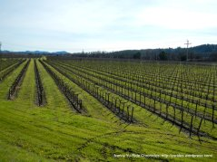 great lines-Alexander Valley