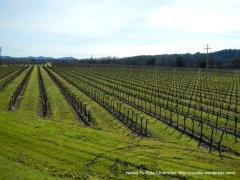 great lines-Alexander Valley