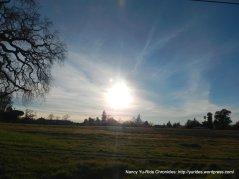 low sun over Hagen Rd
