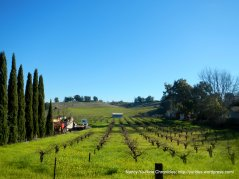 vineyard-Martinez