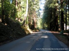 Cazadero Hwy-thru the redwoods