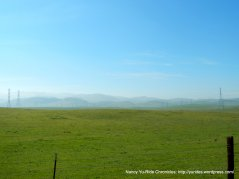 beautiful grasslands