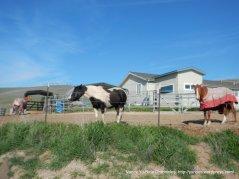 horse ranch at top of N Flynn
