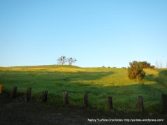 Paso Nogal Park-Pleasan Hill