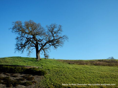 lone tree off Stone Valley Rd