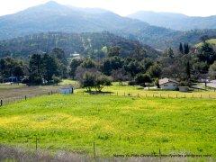 Clayton in the foothills of Mt Diablo