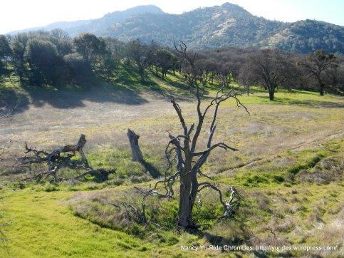 foothills landscape