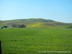 open pastoral land