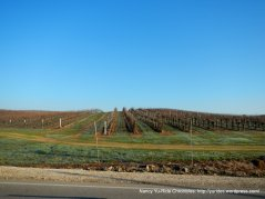 vineyards on S El Pomar