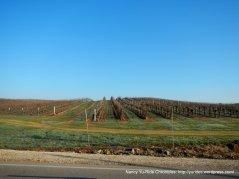vineyards on S El Pomar
