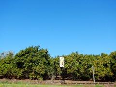 avacado groves